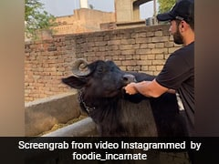 Buffalo Enjoys Eating Special Sandwich; See Adorable Video Here