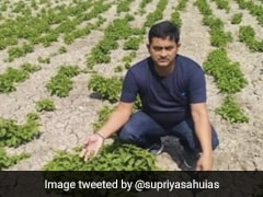 बिहार में 1 लाख रुपए किलो वाली सब्जी की खेती करने वाले किसान का दावा निकला झूठा, हुई जांच तो कही नहीं मिला Hop shoot