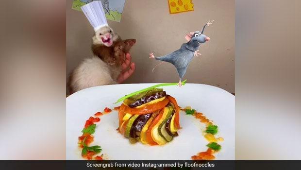 Viral: This Ferret Chef Recreates The Famous Ratatouille Scene
