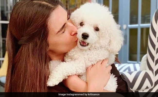 Have You Met Kriti Sanon's 'Munchkin'? Dog Moms Will Relate