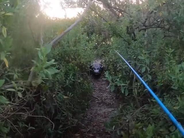 Video : Watch: Giant Alligator Chases Florida Man During Tarpon Fishing