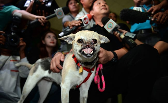 Dog Who Lost Its Snout While Rescuing Two Girls In The Philippines Dies