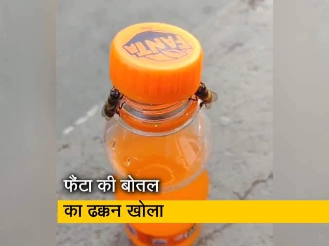 Videos : दो मधुमक्खियों ने देखते ही देखते खोल दिया कोल्डड्रिंक की बोतल का ढक्कन, VIDEO वायरल
