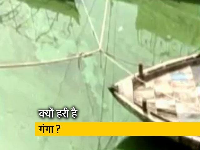 Video : बनारस में गंगा का पानी हरा हुआ, क्या है वजह?
