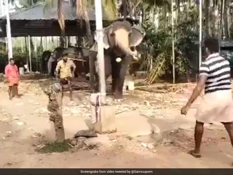 """""""Has English Passport"""": Michael Vaughan Shares Video Of Elephant Playing Cricket. Watch"""