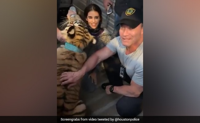 'We Got Him. He Is Healthy': US Officials Find Missing Tiger. Watch