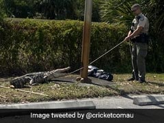 """""""Hangry"""" Alligator Chases Customers Through Restaurant Parking Lot"""