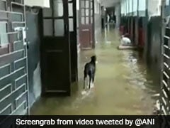 Watch: Key Hospitals In Bihar Flooded After Heavy Rain