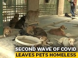 Video : Amid India's Deadly Second Covid Wave, Pets Left Homeless
