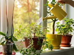 The Perfect, Best Houseplant That You Need According To Your Zodiac Sign