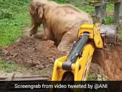 """Watch: Elephant's Incredible Rescue From Pit - """"Hand Of God"""""""