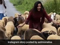 सड़क के बीचों-बीच भेड़ों के साथ Monalisa ने यूं की मस्ती, सोशल मीडिया पर वायरल हुआ Video