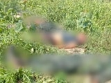 Video : 6 Terrorists Of Rebel Group Killed In Encounter In Assam
