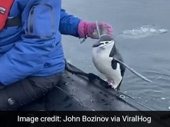 """Watch: """"Lonely"""" Penguin Jumps Into Tourist Boat In Antarctica"""