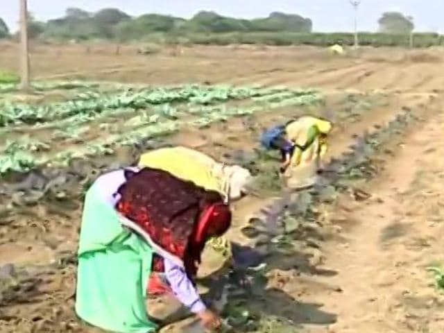 """Video : Fertiliser Subsidy Hiked by 140%, PM's Office Says """"Historic Decision"""""""