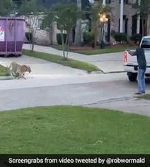 देखें BEEPS VIDEO: टेक्सास की सड़कों पर घूमता दिखा बंगाल टाइगर, मालिक गिरफ्तार