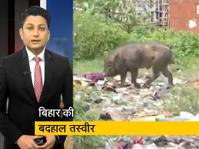 Videos : बिहार की स्वास्थ्य व्यवस्था की खुली पोल! सूअर, बकरियों का डेरा बना अस्पताल