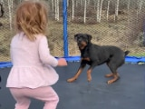 Video : Watch: Toddler Jumps On Trampoline With Best Friend - An Excited Rottweiler