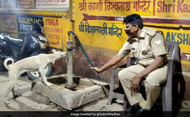 पुलिसवाले ने हैंडपंप चलाकर कुत्ते को पिलाया पानी, IPS बोली- 'जो कुत्तों से प्यार करता है, वो अच्छा इंसान होता है' – Viral Photo