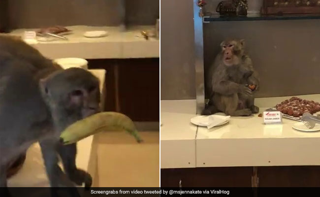 Watch: Monkey Enjoys A Feast At Delhi Airport. Old Video Is Viral