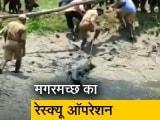 Video : पश्चिम बंगाल में मगरमच्छ का रेस्क्यू ऑपरेशन