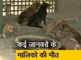 Video : कोविड के कारण बेसहारा हो गए कई पालतू जानवर
