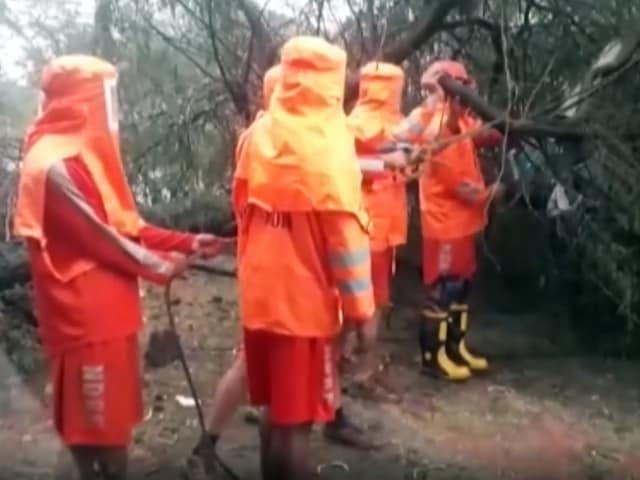 Video : Cyclone Tauktae: NDRF Removes Uprooted Trees In Gujarat's Navsari