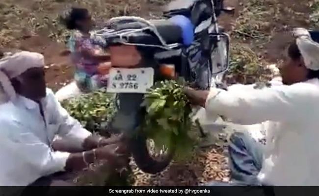 Indian farmers Jugaad Technique For Groundnut Farming By Bike Harsh Goenka Finds Awesome Watch Viral Video – किसानों ने पौधों से मूंगफली निकालने के लिए बाइक से किया ऐसा जुगाड़, हर्ष गोयनका भी हो गए फैन