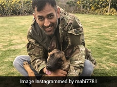 Watch: Fans Spot MS Dhoni In Wife Sakshi's Latest Video Of Dogs Playing Fetch