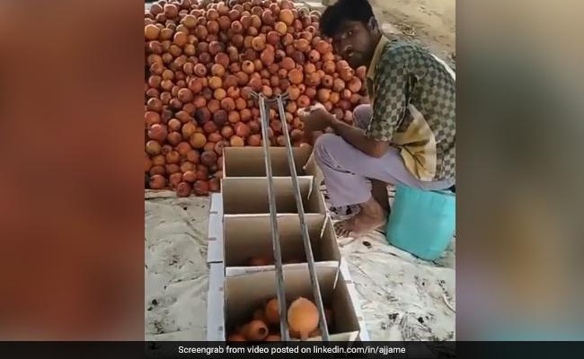 Indian Man Amazing Jugaad To Sort Fruits Based On Their Size Video Goes Viral On Social Media – शख्स ने छोटे और बड़े फल अलग करने के लिए लगाया ऐसा जुगाड़, विदेशी कंपनी का CEO भी हुआ मुरीद
