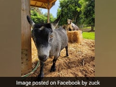 Mark Zuckerberg's Goat Pic Sparks Bitcoin Speculation. Details Here