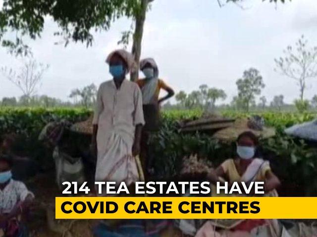 Video : 12 Covid Deaths, Over 1,800 Positive At Assam Tea Gardens