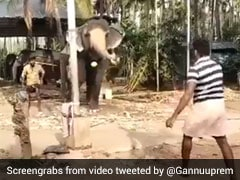 """""""Has English Passport"""": Vaughan Shares Video Of Elephant Playing Cricket"""
