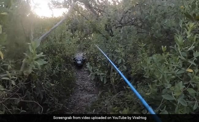 Florida-mans-close-encounter-with- Giant -alligator Watch Viral Video – मछली पकड़ने गया था शख्स, तभी आ गया विशालकाय मगरमच्छ, करने लगा उसका पीछा, फिर हुआ कुछ ऐसा