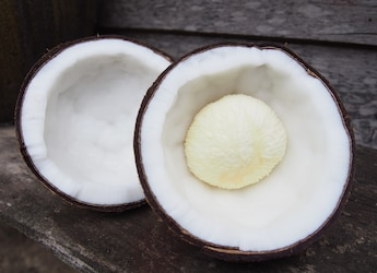 Ever Heard Of Coconut 'Embryo'? Viral YouTube Video May Surprise You