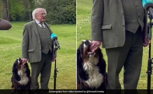 Viral Video: Irish President's Dog Steals The Show On Live TV
