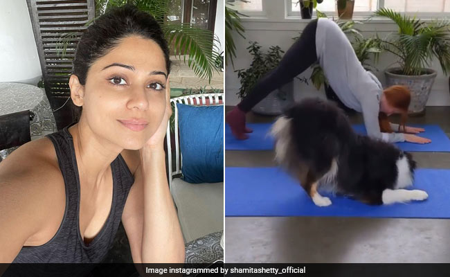 Downward Dog With An Actual Dog? BRB, Too Busy ROFL AT Shamita Shetty's Post