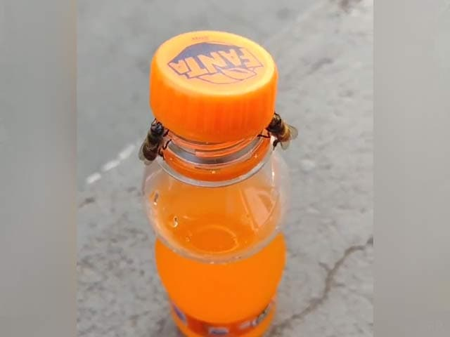 Video : Viral Video Of Two Bees Opening A Bottle Has The Internet Stunned