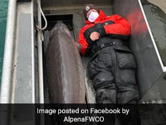 100-Year-Old 'Monster' Fish, Weighing Over 90 Kg, Caught In Michigan