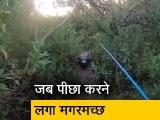 Video : जब मछली पकड़ने गए शख्स का पीछा करने लगा विशाल मगरमच्छ