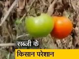 Video : कोरोना संकट के बीच सब्ज़ियां उगाने वाले किसानों पर टूटी आर्थिक आफ़त