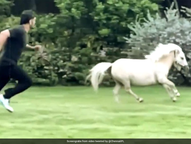 """Watch: MS Dhoni Enjoys """"Playtime"""" With A Pony, Wife Sakshi Shares Video"""