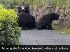 Watch: Bear Charges At Tamil Nadu Biker In Hair-Raising Video