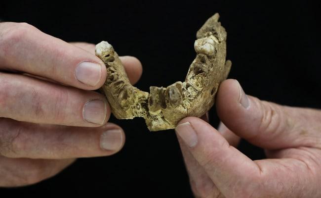 'Nesher Ramla Homo': New Type Of Early Human Found In Israel