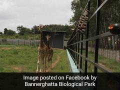 Adopt, Name Animals, Donate: Bengaluru Zoo Appeals As Covid Hits Revenues