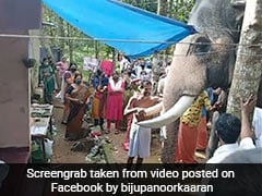 Watch: Video Of Elephant Paying Last Respects To Mahout Moves The Internet