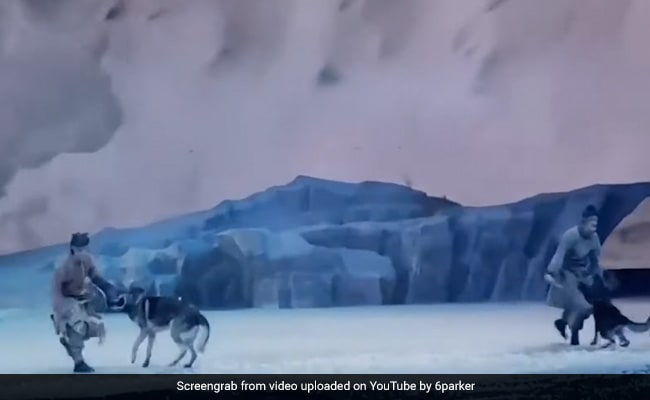 Caught On Camera: Wolves Chase Actors Across Stage During Live Show