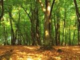 Video : World Environment Day 2021: Focus On Ecosystem Restoration