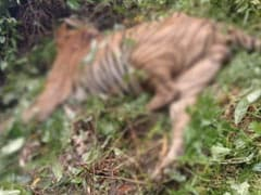 """Kaziranga Staff Suspended For """"Unwarranted Firing"""" That Killed A Tiger"""