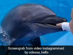 Video: Dolphin Leaps Out Of Water, Bites 6-Year-Old's Hand